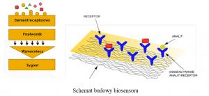 schemat budowy biosensora