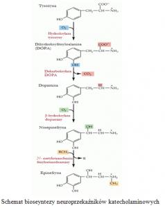 schemat biosyntezy